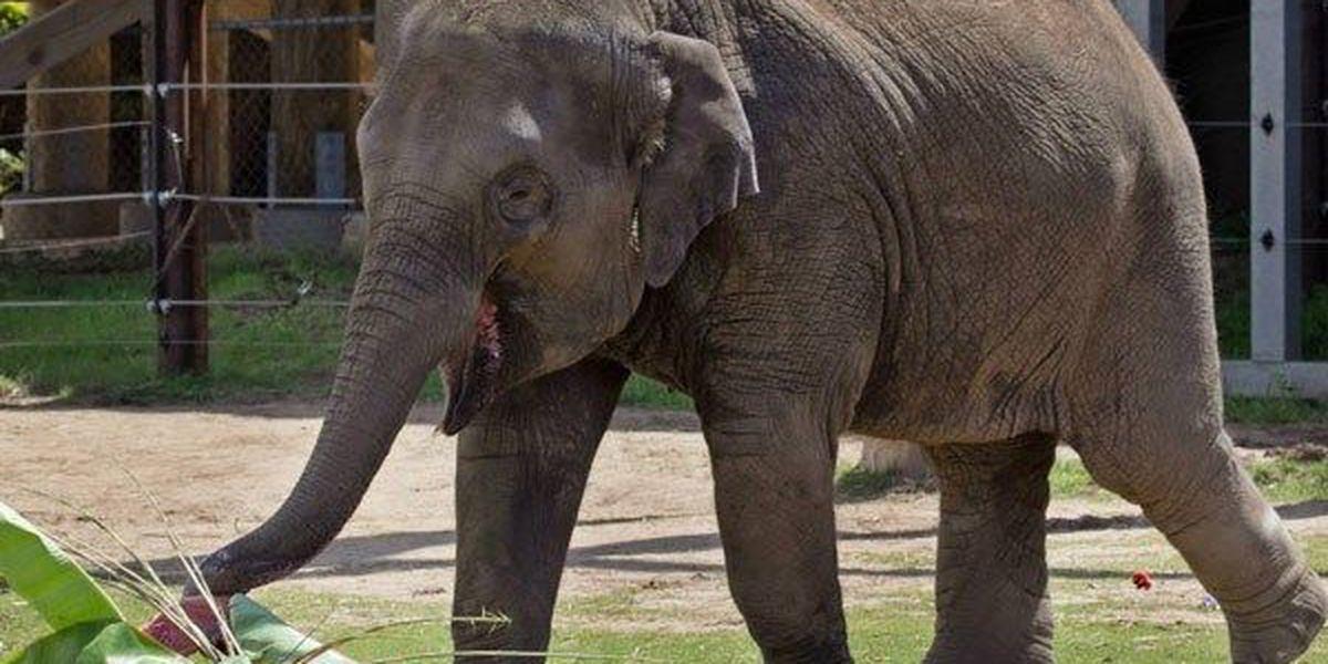 Oklahoma City Zoo announces elephant's unexpected death