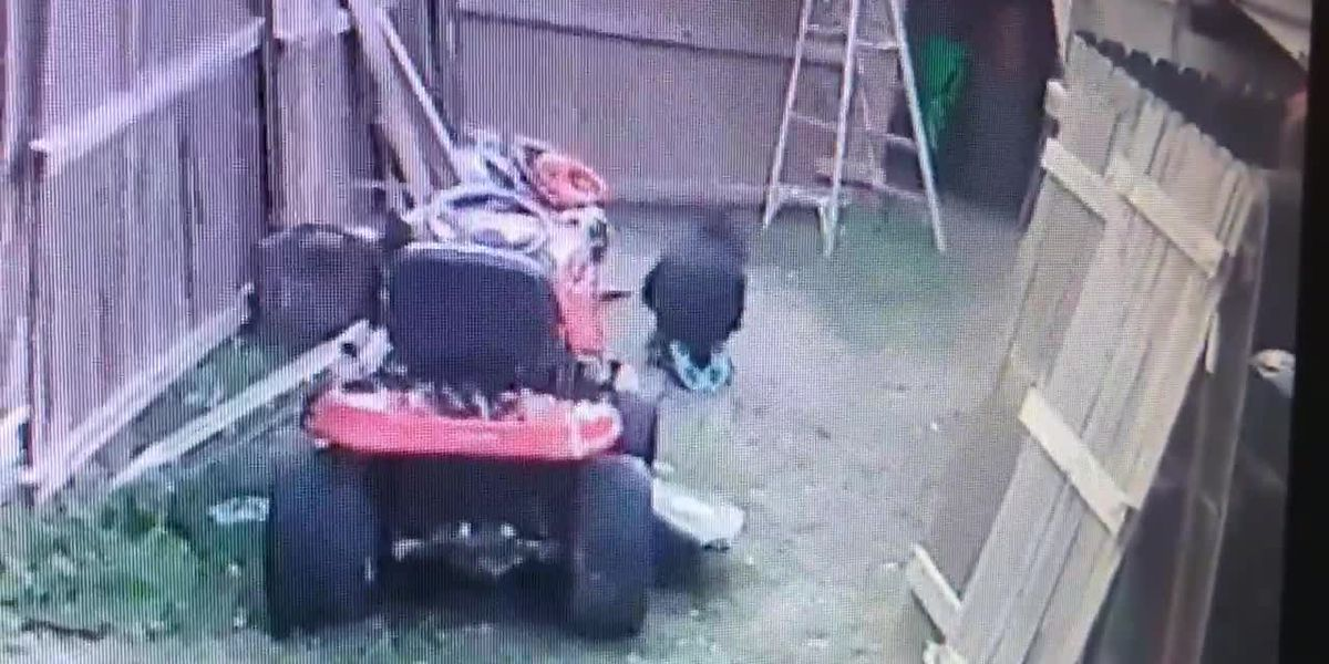 GRAPHIC VIDEO: Lawton man catches his dog being beaten on home surveillance video
