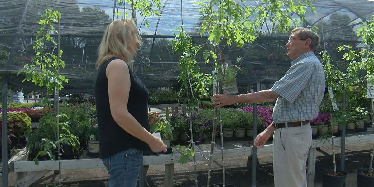 Two local businesses beautify the community by giving away trees