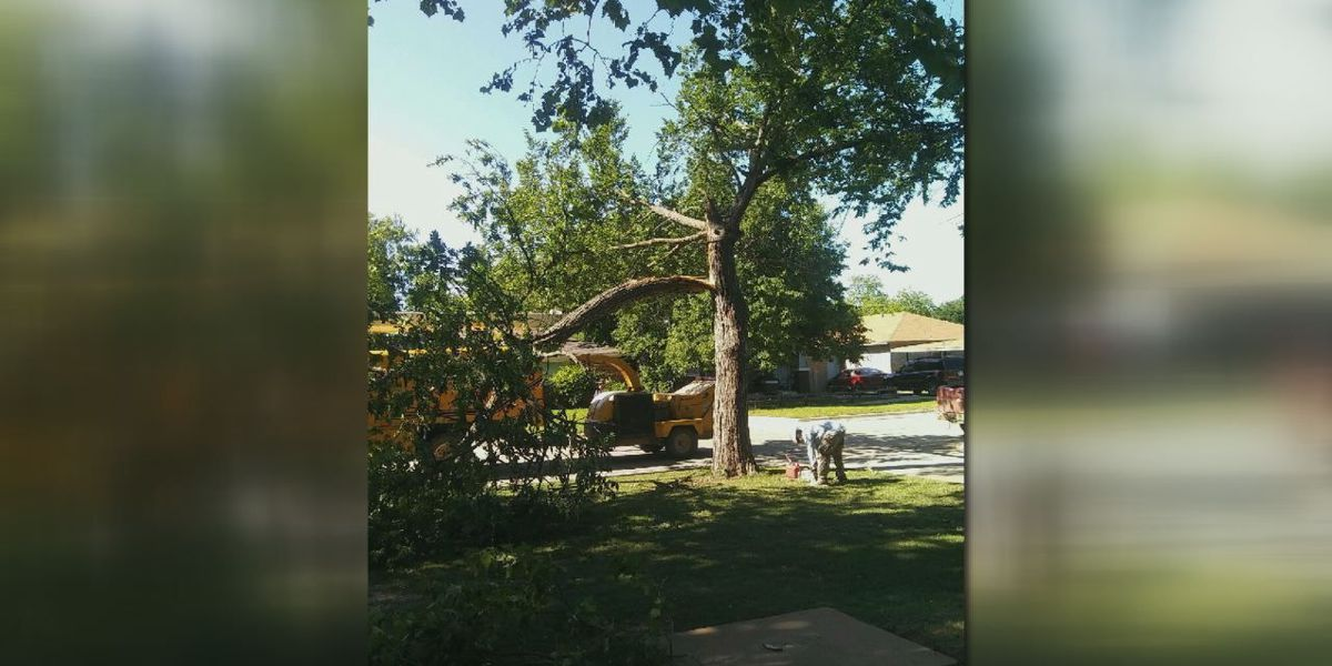 Windy day keeps tree removal crews busy