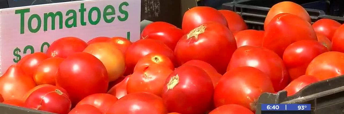 MedWatch: Lawton's 8th Annual Tomato Festival - 6/26/2019