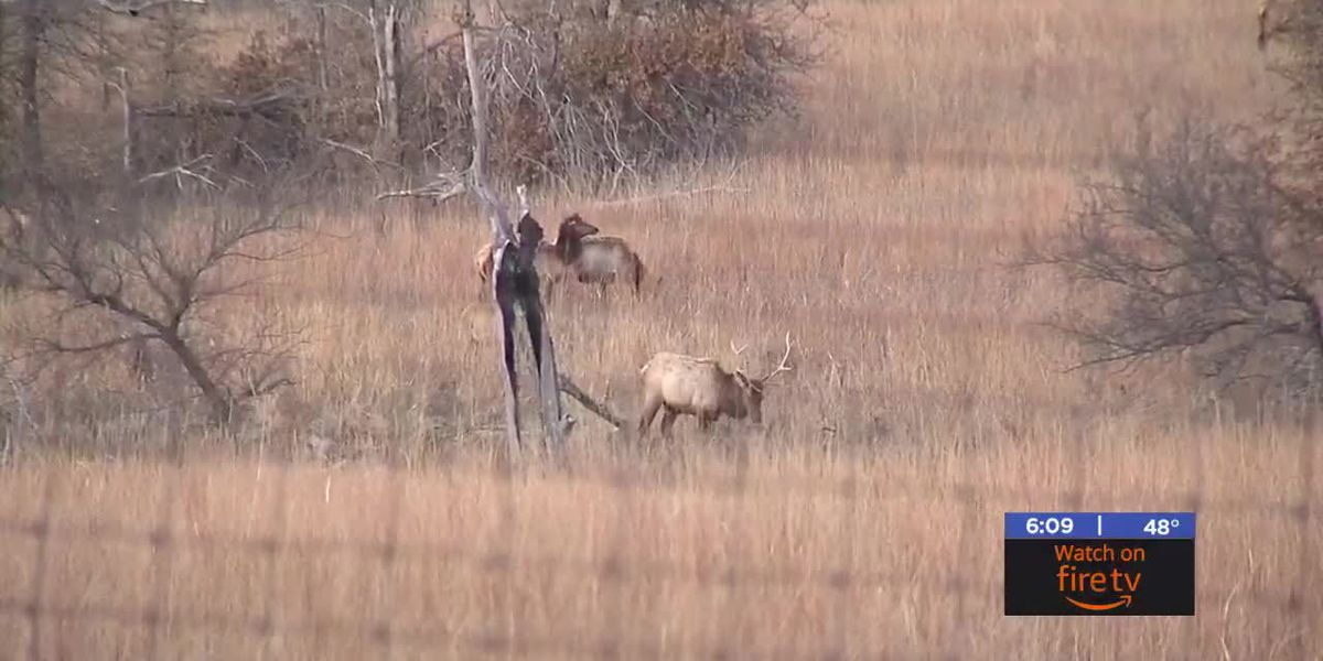 Wichita Mountains Wildlife Refuge Elk Hunt happening despite shut down