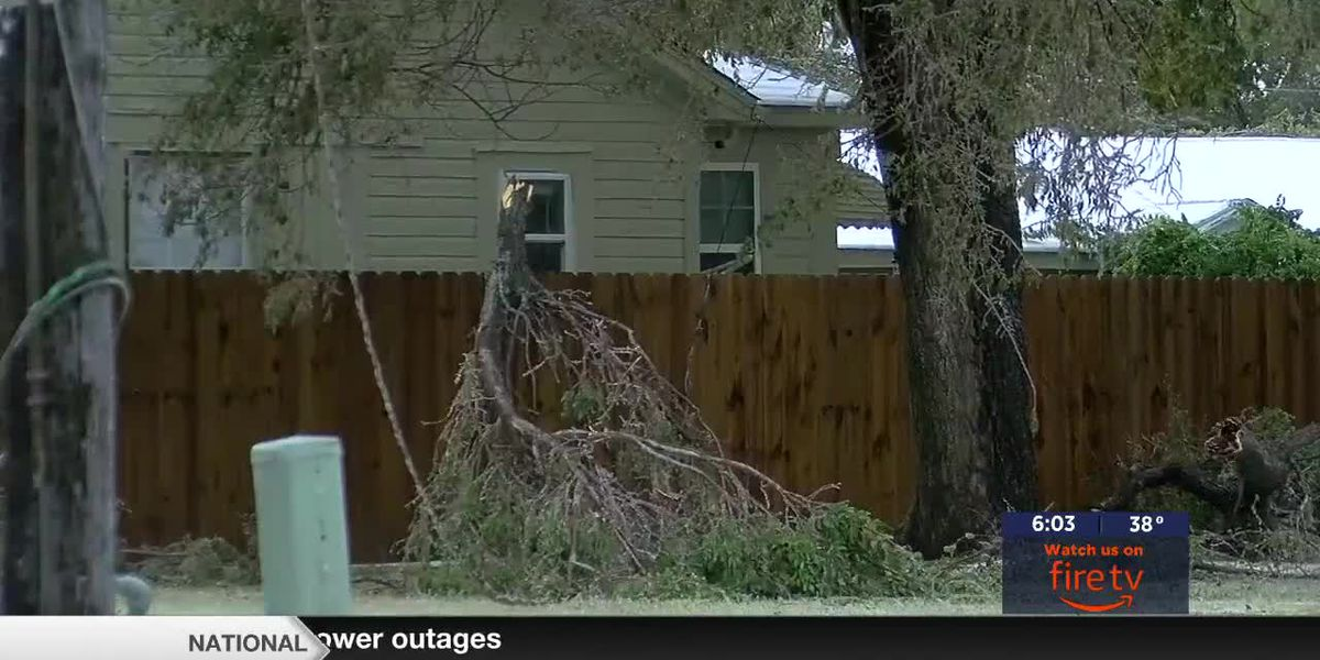 Tree limb pick up available in Lawton and Altus
