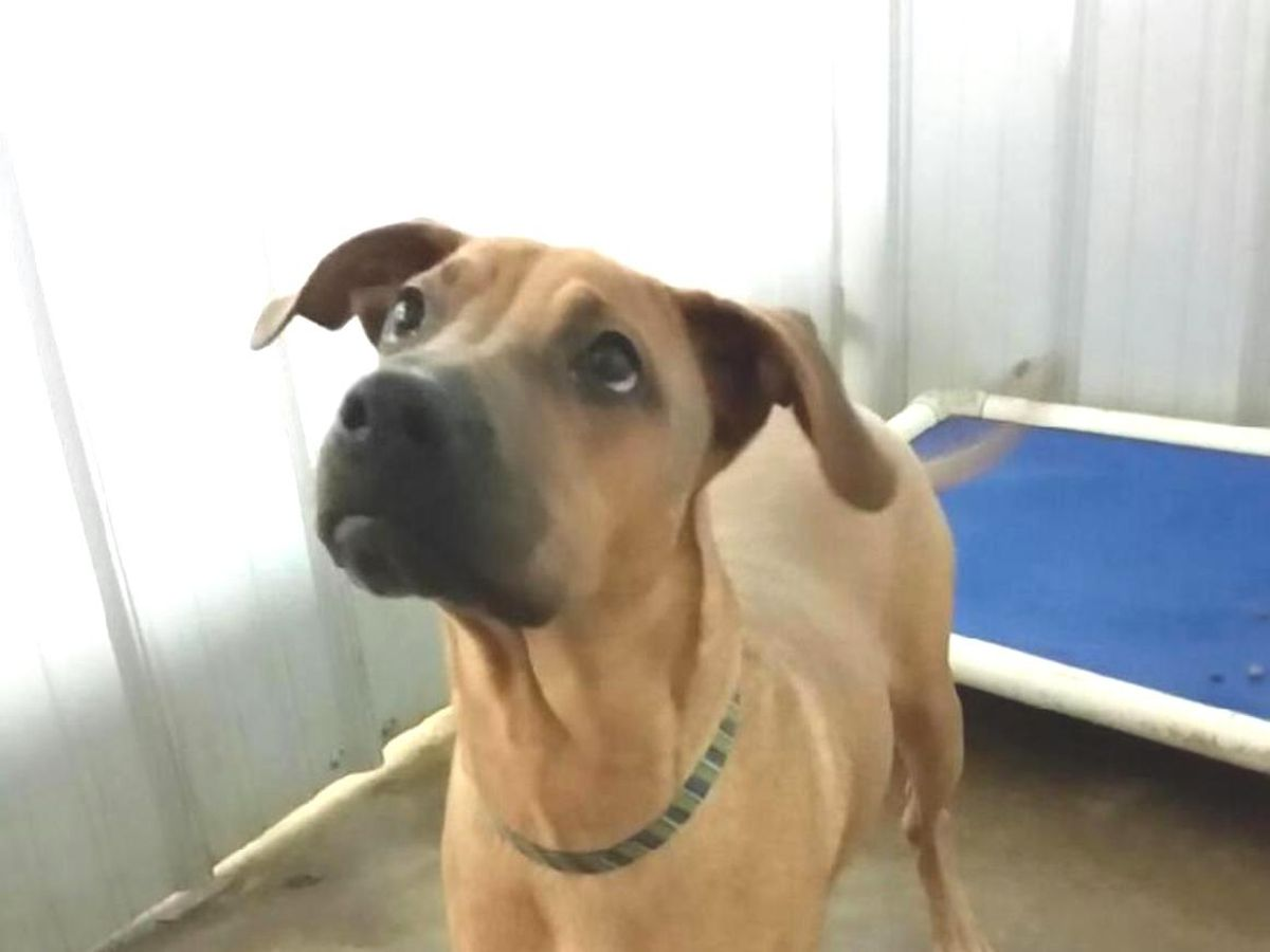 Altus Pet of the Week: Dane