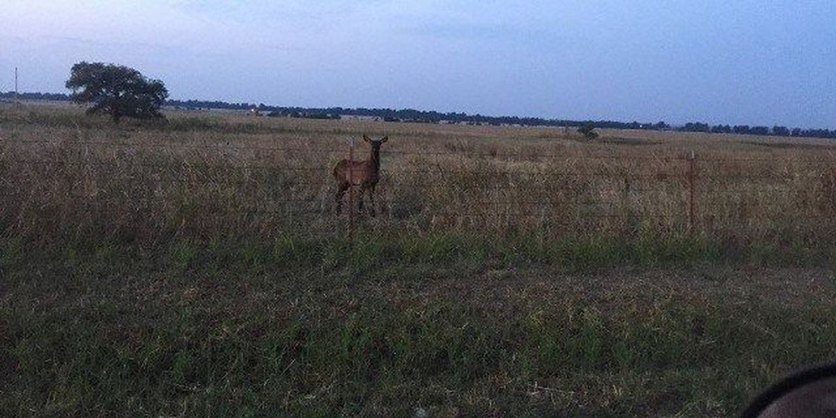 Game wardens search for poacher